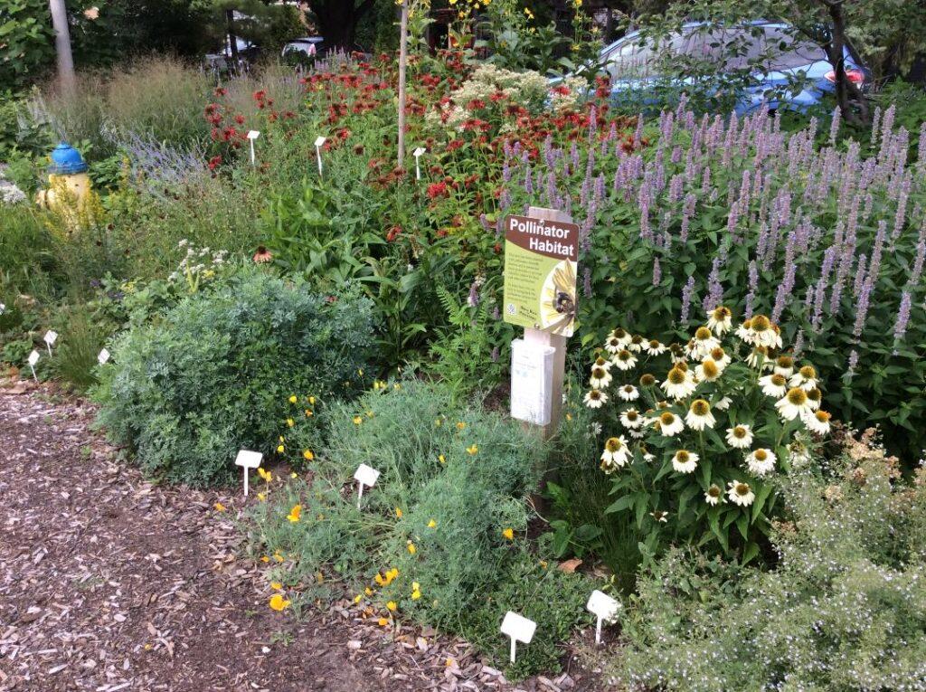 Photo by Berit Erickson. Example of a pollinator garden
