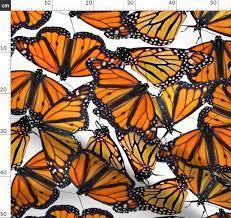Hunt Club's Butterflyway Project